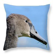 Young Swan Throw Pillow