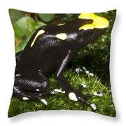 Dyeing Poison Frog Throw Pillow