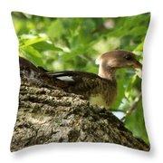 Immature Hooded Merganser Throw Pillow