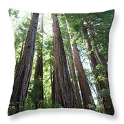 Redwoods Sequoia Sempervirens Throw Pillow
