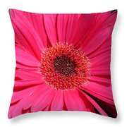 1052c Throw Pillow