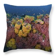 Reef Scene With Coral And Fish Throw Pillow