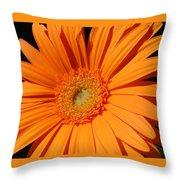 1102-2 Throw Pillow