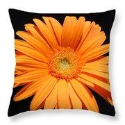 1105-2 Throw Pillow