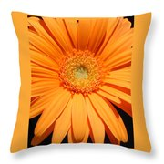 1105-5 Throw Pillow