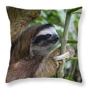 Brown-throated Three-toed Sloth Throw Pillow