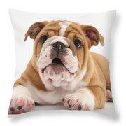 Bulldog Pup Throw Pillow
