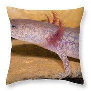 West Virginia Spring Salamander Throw Pillow