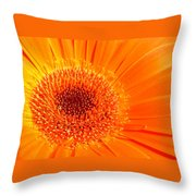 1229-003 Throw Pillow