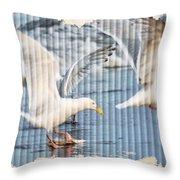 Seagulls Throw Pillow by Debra  Miller