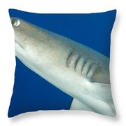 Whitetip Reef Shark, Kimbe Bay, Papua Throw Pillow