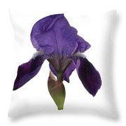 Blue Iris Blooming Throw Pillow