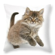Maine Coon Kitten Throw Pillow