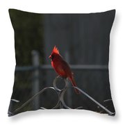 1417 Fenced In Throw Pillow