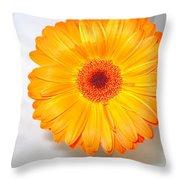 1424c Throw Pillow
