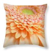 1520 Throw Pillow