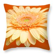 1521-003 Throw Pillow