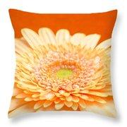 1523-001 Throw Pillow