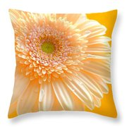 1527-002c Throw Pillow