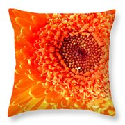 1571-001 Throw Pillow