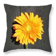 1599-001 Throw Pillow