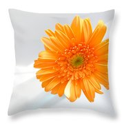 1610c Throw Pillow