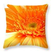 1614-001 Throw Pillow