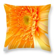 1614c-002 Throw Pillow