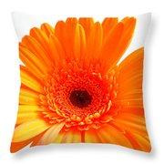 1621-002 Throw Pillow