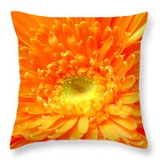1626-001 Throw Pillow