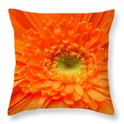1627c Throw Pillow