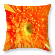 1628-001 Throw Pillow