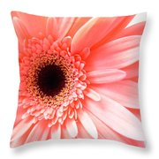 1631c Throw Pillow