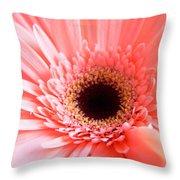 1633 Throw Pillow