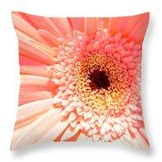 1673-001 Throw Pillow