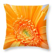 1726c Throw Pillow