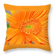 1795-001 Throw Pillow