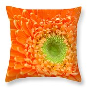 1819c Throw Pillow
