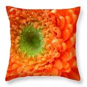 1821 Throw Pillow