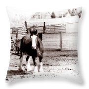 1900  Clydesdale Horse Throw Pillow