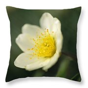 A Close View Of A Wildflower In Yoho Throw Pillow