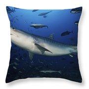 A Large 10 Foot Tiger Shark Swims Throw Pillow