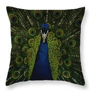 A Male Peacock Displays His Beautiful Throw Pillow