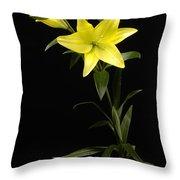 A Yellow Lily Lilium Canadense Throw Pillow