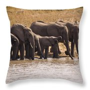 African Elephant Loxodonta Africana Throw Pillow