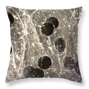 American Toad Eggs Throw Pillow