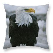 An American Bald Eagle Stands Throw Pillow