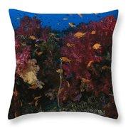 Anthias Fish Swim Near A Reef Wall Throw Pillow