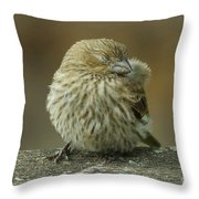 Baby House Finch Throw Pillow