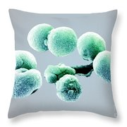 Bacteria, Streptococcus Pneumoniae, Sem Throw Pillow